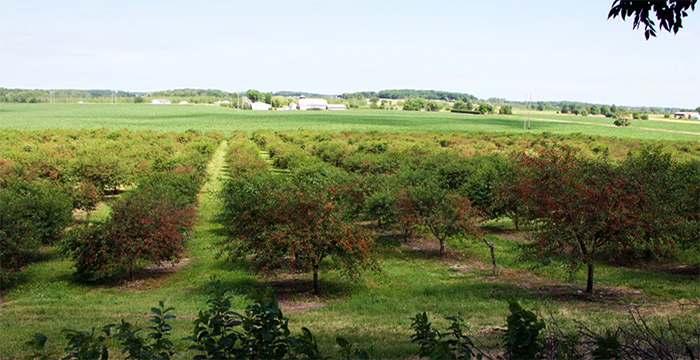 Meleddy Cherry Farm