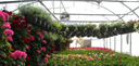 Maas Floral & Greenhouse