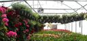 Maas Floral & Greenhouse